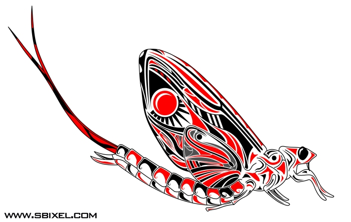 HaidaMayfly