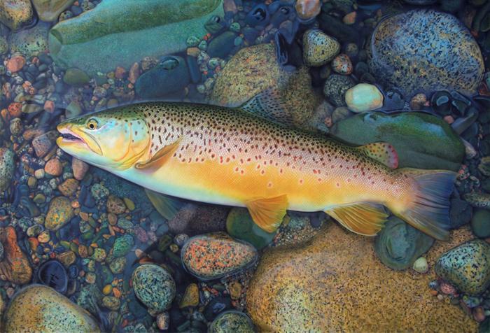 Q3 martinsimpsonartist.com trout